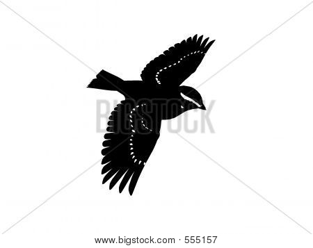 Monochrome Songbird