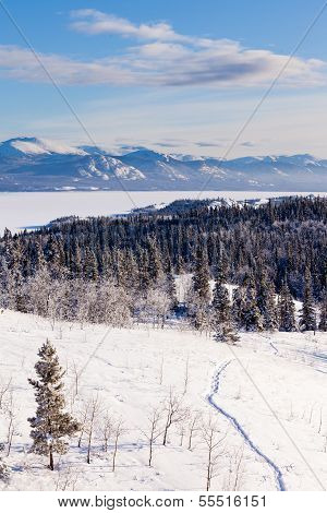 Taiga Snowshoe Trail Landscape Yukon T Canada