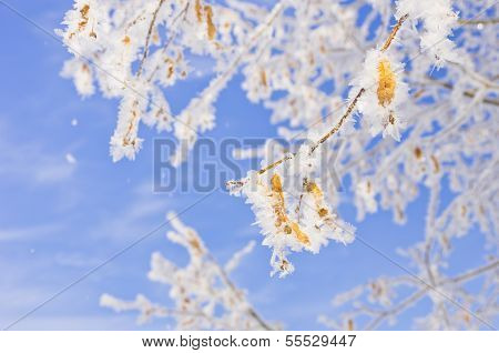 Frost Snow