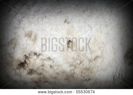 Muddy White Horse Pelt
