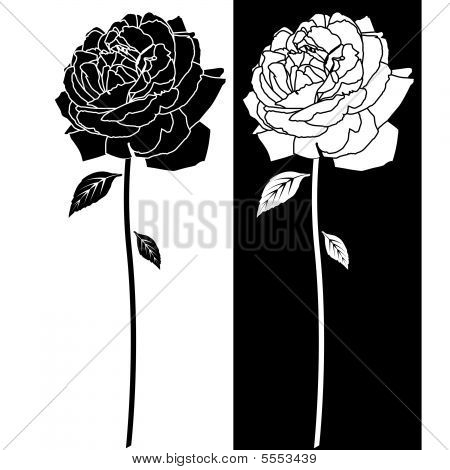 Rose Black White Drawing