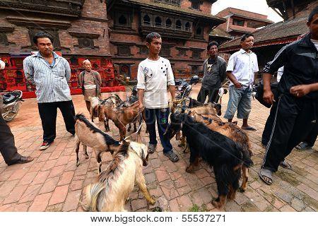 Animal, goat sacrifice in Nepal