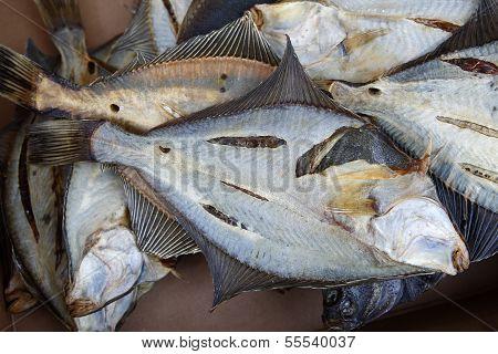 Flatfish.