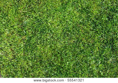 Grass Field Top View Texture