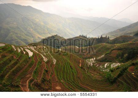 Longji Rice Terraces Landscape, Guilin Province, China