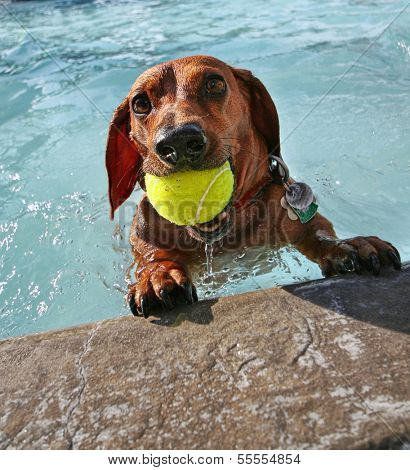 a dog at a local public pool