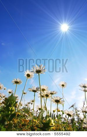 Daisy Flower Under Blue Sky