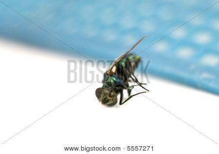 Macro Of Dead Fly