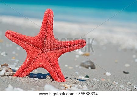 Red Star And Blue Sea