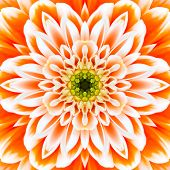 stock photo of kaleidoscope  - Orange Concentric Flower Center Macro Close - JPG
