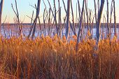 image of tallgrass  - Tallgrass and trees on wetland with a frozen lake beyond taken at Cedar Bluff State Park - JPG