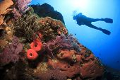 picture of biodiversity  - Scuba Diving on coral reef underwater - JPG