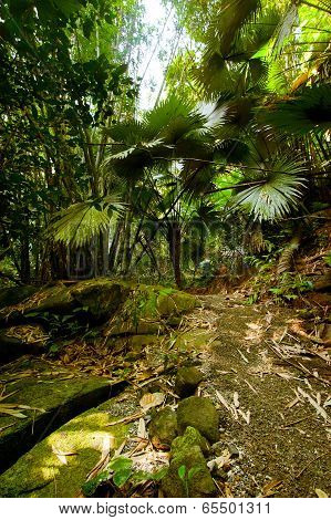 Rainforest. Palm Trees And Plants At Jungle