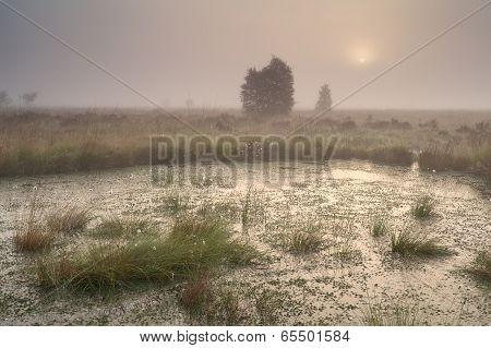 Sunrise Over Bog In Dense Fog