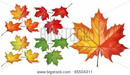 Detailed set with maple leaves
