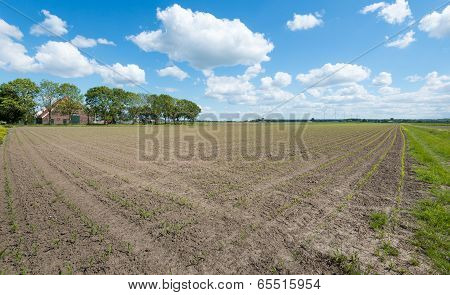 Agricultural Landscape In The Spring Season