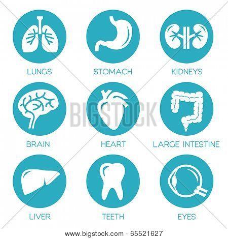 Human organs - vector icons collection