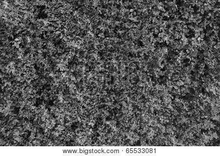 Black & White Leaf Wall