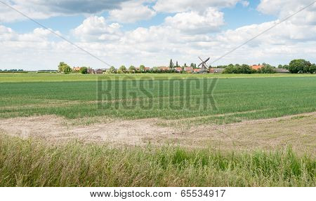 Farmland With Small Onion Plants In Spring