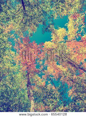 Instagram Autumn Leaves