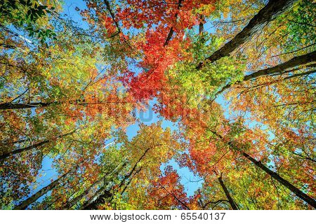 Colorful Leaves Up In The Trees