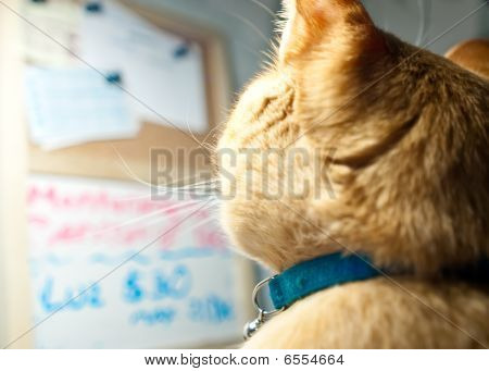 Kitten Observing A Chalkboard