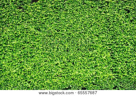 Tiny green leaves pattern background