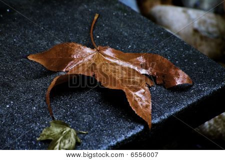 The Last Autumn Leaf