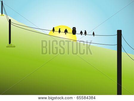 Birds on a Wire Scene
