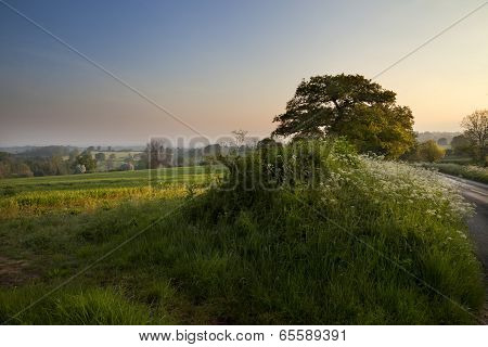 English Countryside at Dawn