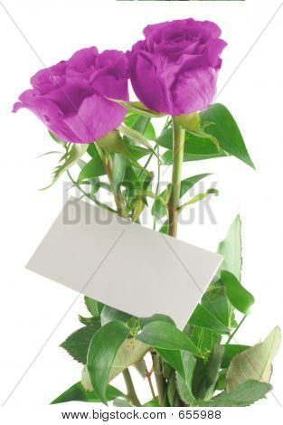 Purple Roses With Blank Love Note