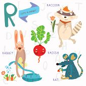 picture of raccoon  - Alphabet design in a colorful style - JPG
