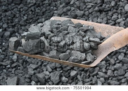 Shovel Full  Coal