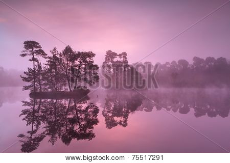 Purple Misty Sunrise Over Wild Lake In Forest
