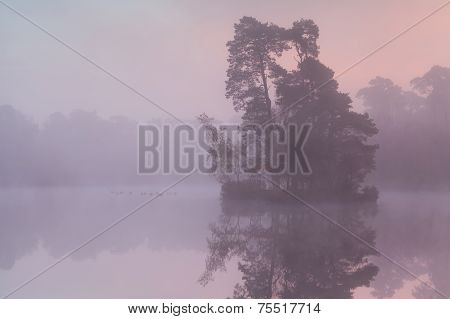 Misty Sunrise On Forest Lake With Birds