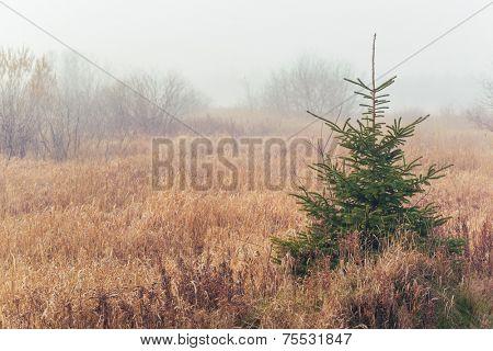 Foggy morning in the fall landscape of rural Prince Edward Island, Canada.