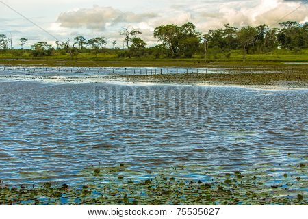Pantanal River - Pantanal is one of the world's largest tropical wetland areas located in Brazil , South America