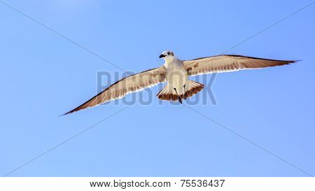 Seagull On Blue Sky