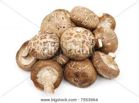 A Selection Of Shitake Mushrooms