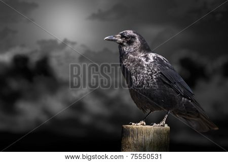 Clouds and crow that can be used for halloween