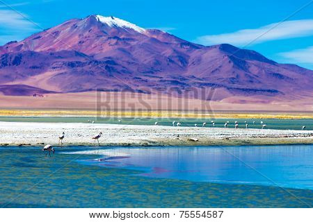 Atacama Desert with Flamingos, Chile