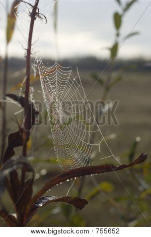 Vroege ochtenddauw op Spider Web