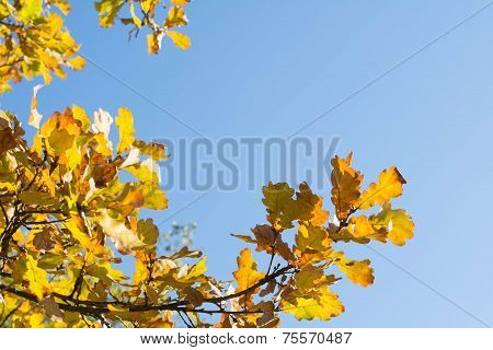 yellow leaves against the sky
