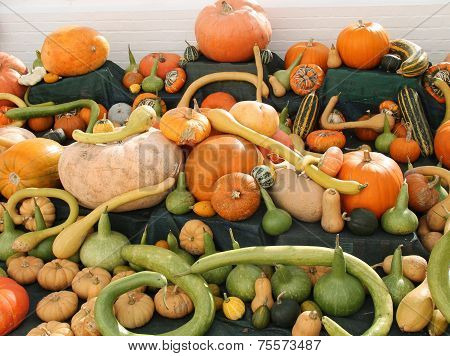 Pumpkins and Squashes.