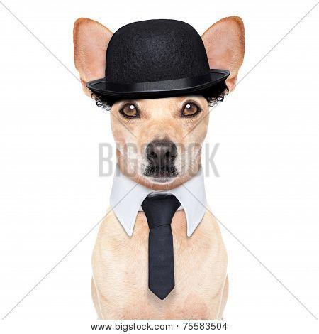 Funny Retro Dog