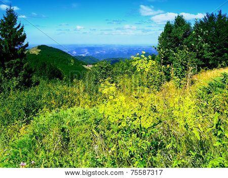 Meadow in Bulgarian Mountains