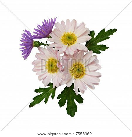 Asters Flowers Composition