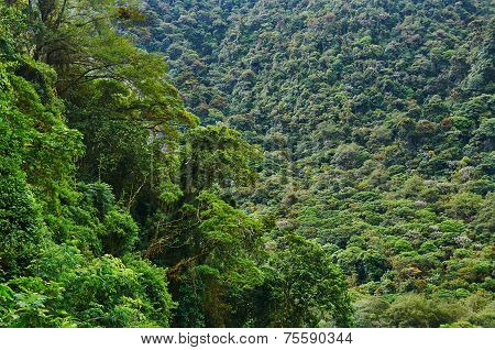 Rainforest In Central America