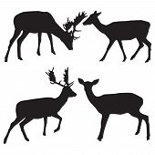 stock photo of deer family  - Silhouettes of male and female deer vector - JPG