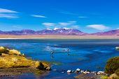 stock photo of flamingo  - Atacama Desert with Flamingos - JPG